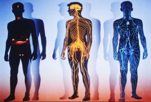 компоненты внутренней среды организма человека