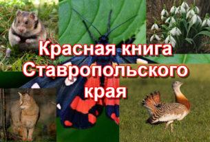 Растения и животные Ставропольского края занесенные в Красную книгу