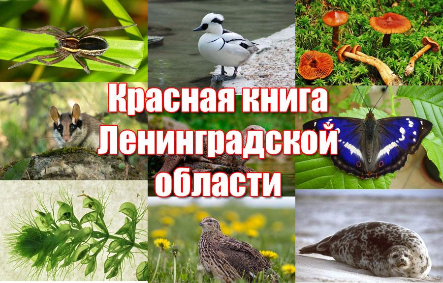 Красная книга Ленинградской области