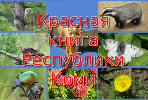 Красная книга Республики Коми